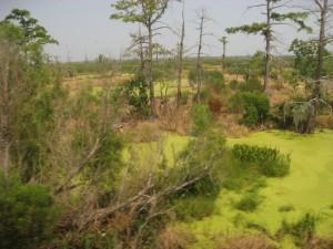 Train Ride Through the Swamp